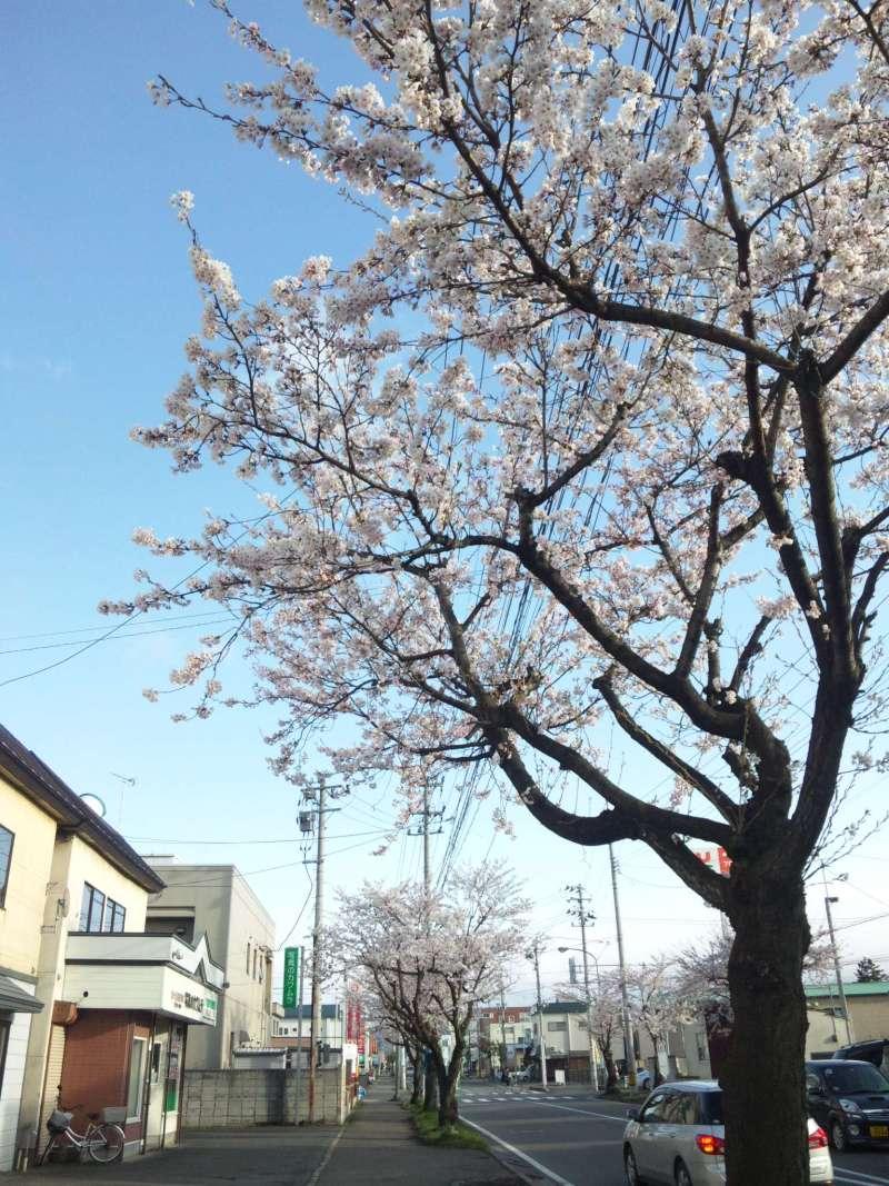 4月28日桜が咲いた