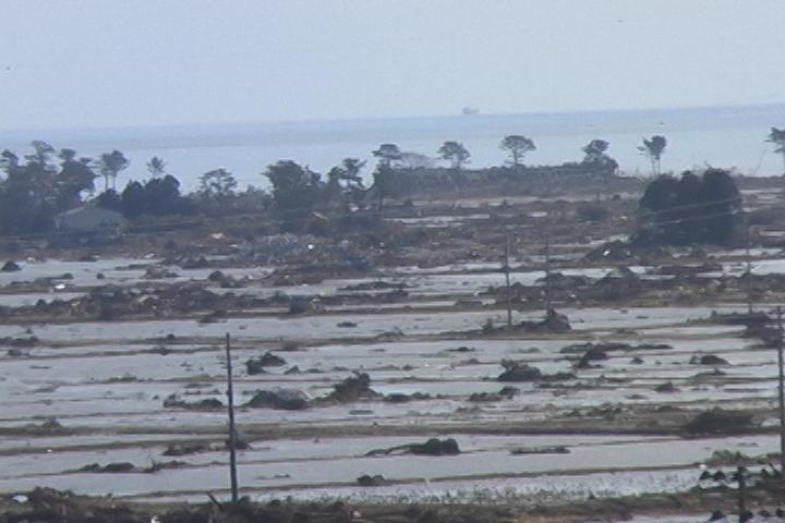 松林がまばらになった海岸