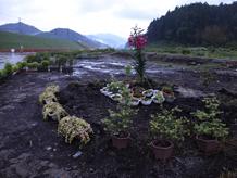 陸前高田定点観測写真12〈森の前 花畑〉