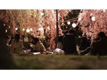 桜|Sakura Sendai April 2013...