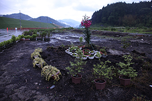 seo natumi flower bed
